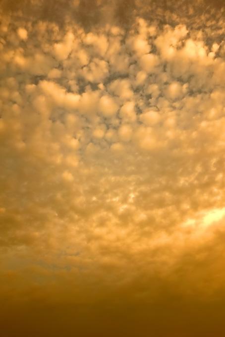 夕焼けに染まる金色の羊雲