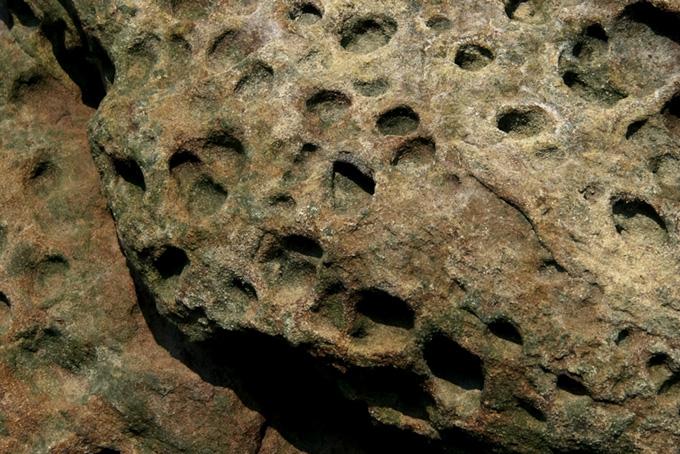 沢山の穴の空いた岩