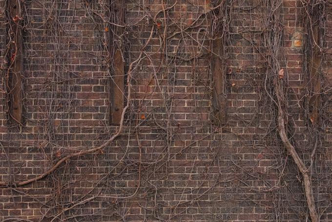 レンガと枯れた蔓の廃墟
