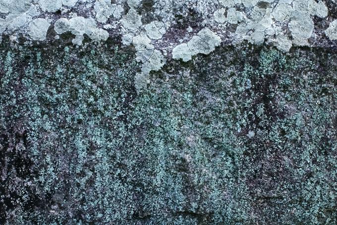 白カビが覆う石のテクスチャ(石のフリー画像)