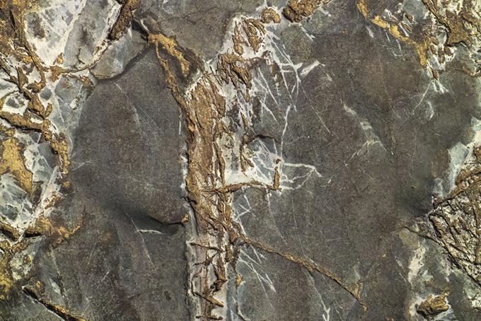 木の根が覆ったような岩のテクスチャ