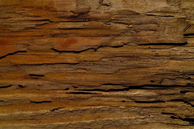 朽ちた木の樹皮のテクスチャの背景