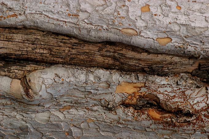 凸凹のある白い木の樹皮のテクスチャの背景