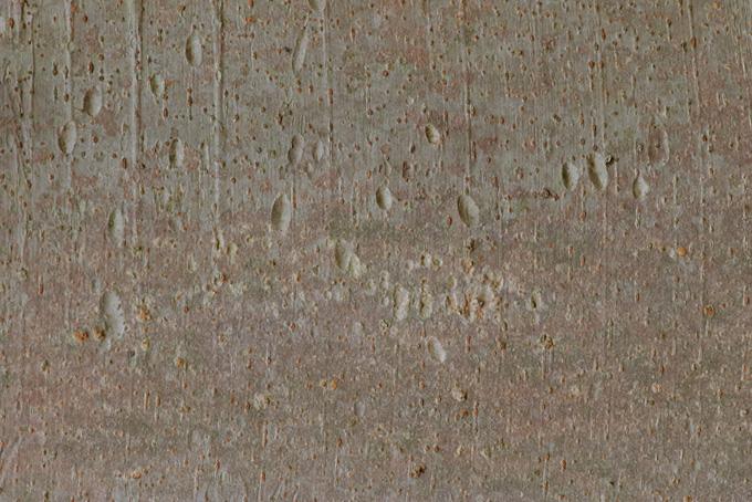 滑らかな表面の灰色の樹皮のテクスチャの背景