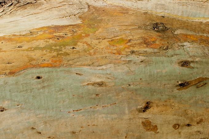 樹皮を剥がされた木のテクスチャの背景