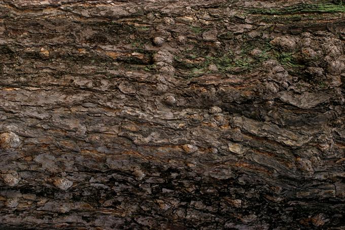 ゴツゴツとした樹皮のテクスチャの背景