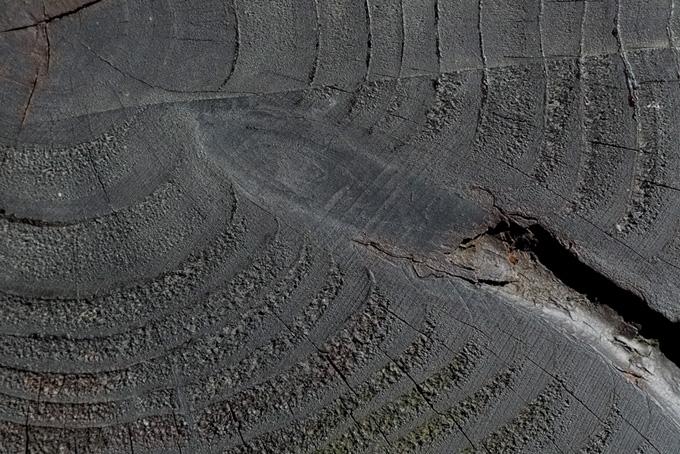古木の断面のテクスチャの背景