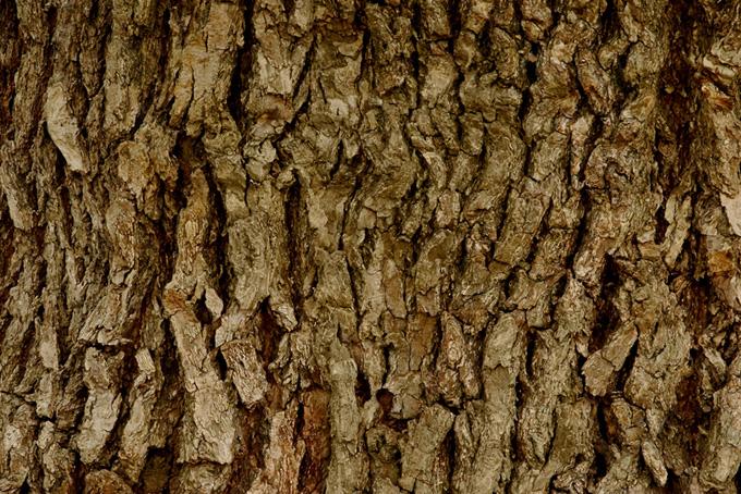 老木の樹皮のテクスチャの背景
