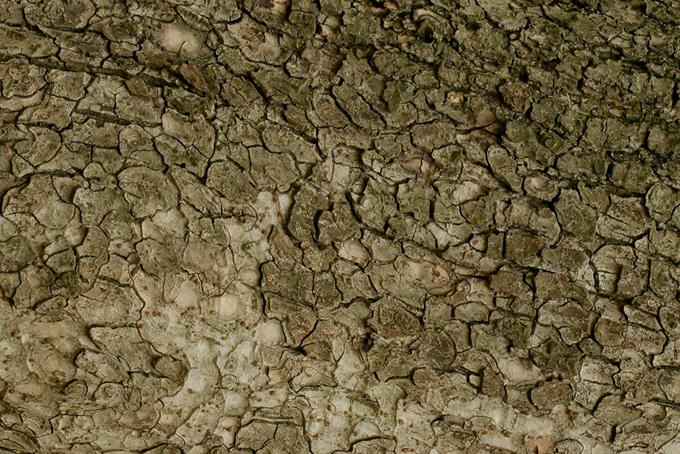 乾燥した木の表面のテクスチャの背景