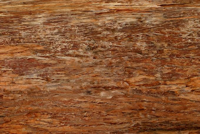 湿り気のある樹皮のテクスチャの背景