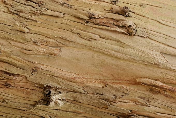 樹皮のテクスチャーの背景