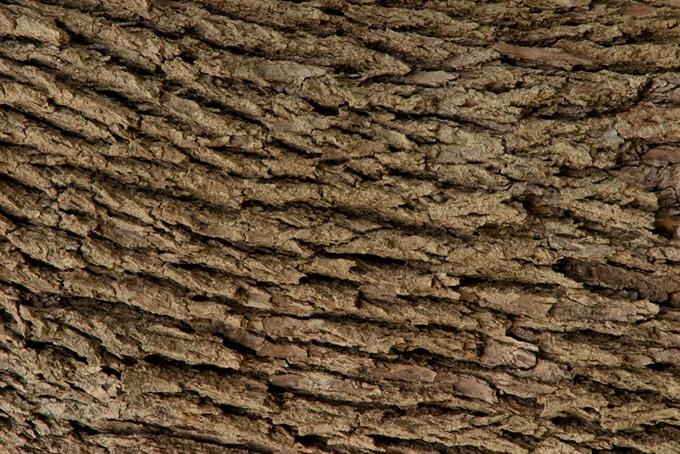 荒い質感の樹皮のテクスチャの背景