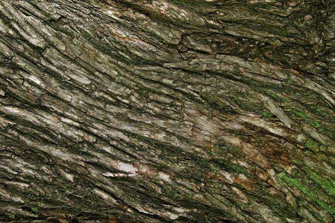 流れるような樹皮の木のテクスチャの背景