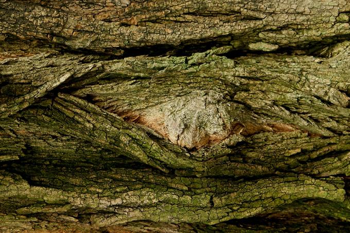 大きな木の表面のテクスチャの背景
