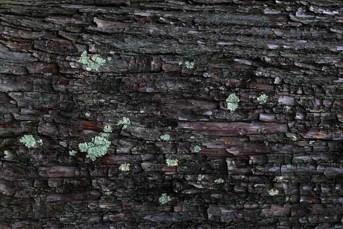 カビの生えた樹皮のテクスチャの背景