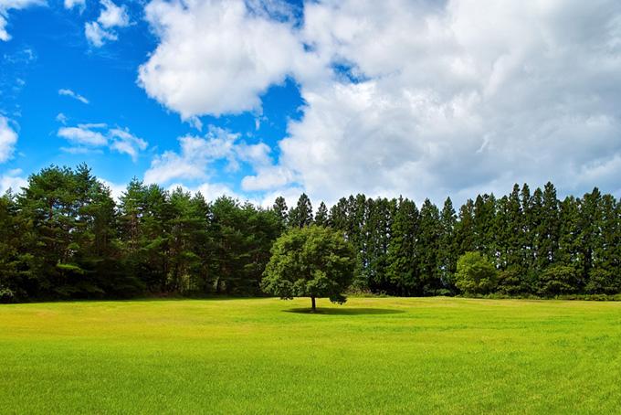 緑の草原に立つ一本の木 画像素材