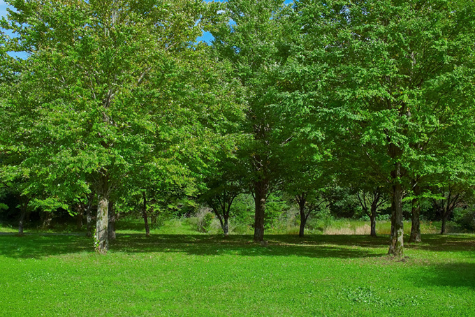 緑の草地の向こうの林(木 フリーの画像)