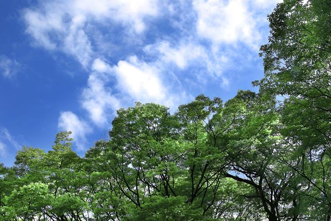 青空と緑のコントラスト(木 フリーの画像)