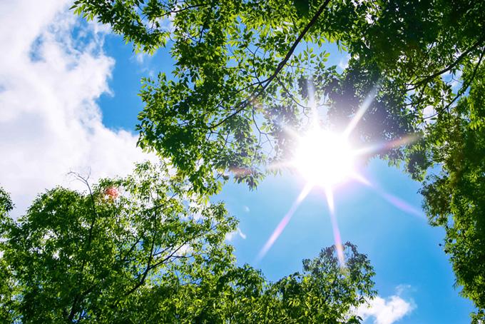 森の中から見上げる太陽(木 フリーの画像)