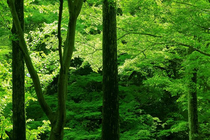 緑が輝く初夏の光(木 フリーの画像)