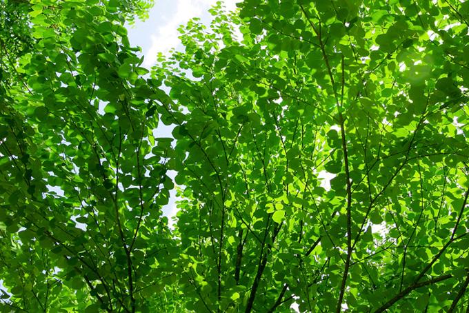 「緑 素材」新緑が美しい木の写真、空と大きな樹木の背景、季節の色々な種類の木の画像など、高画質&高解像度の画像素材を無料でダウンロード
