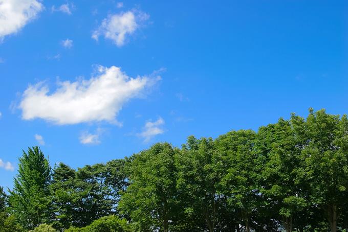青空と濃い緑の木々(木 フリーの画像)