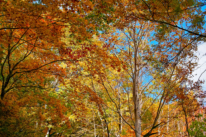 秋深い林の景色