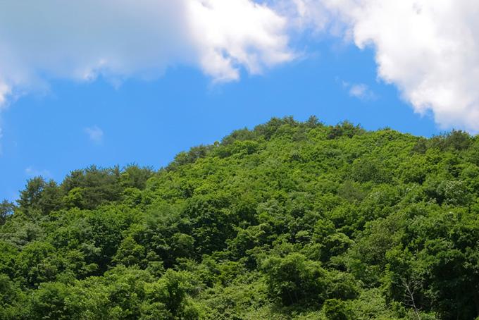 萌える緑の小山(木 フリーの画像)