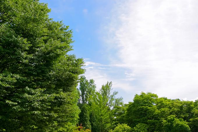 連なる木々の向こうの青空(木 フリーの画像)