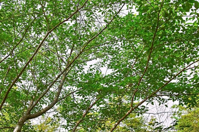 白い背景の木の枝(木 フリーの画像)