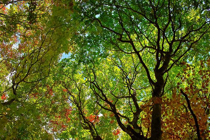 「木 素材」新緑が美しい木の写真、空と大きな樹木の背景、季節の色々な種類の木の画像など、高画質&高解像度の画像素材を無料でダウンロード