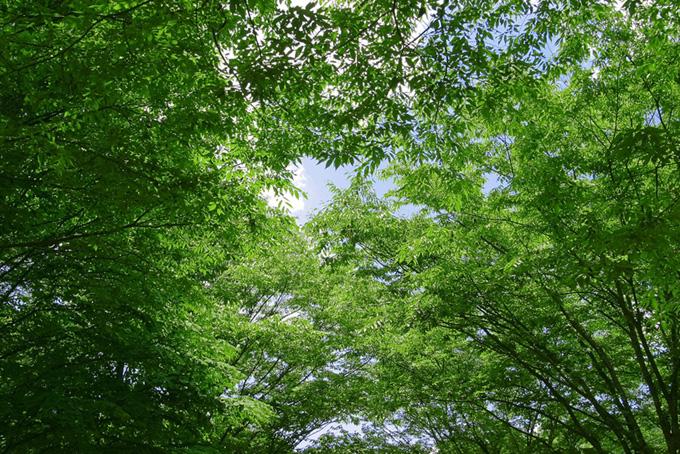 林道を覆う緑色のトンネル
