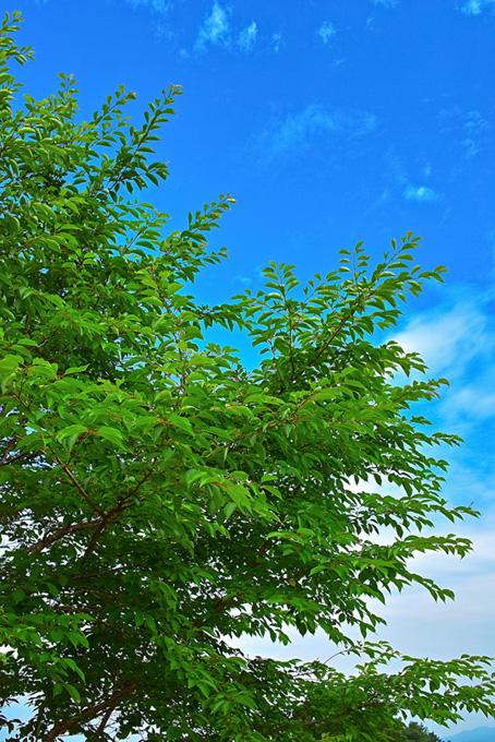 木・林木の画像