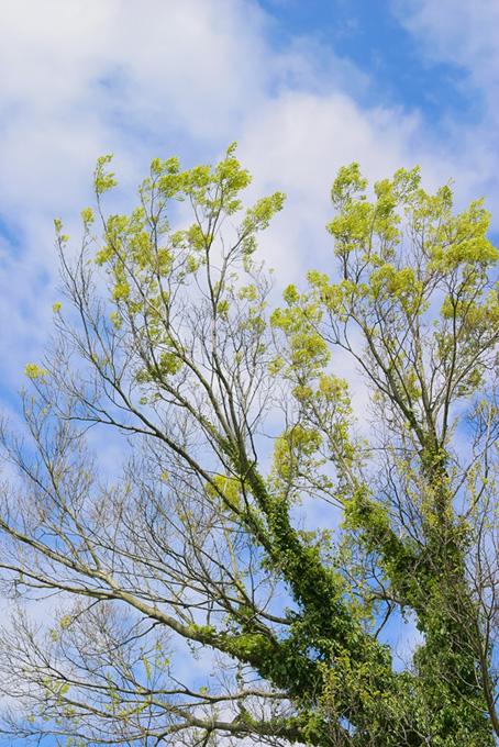 木々と葉(森 フリーの画像)