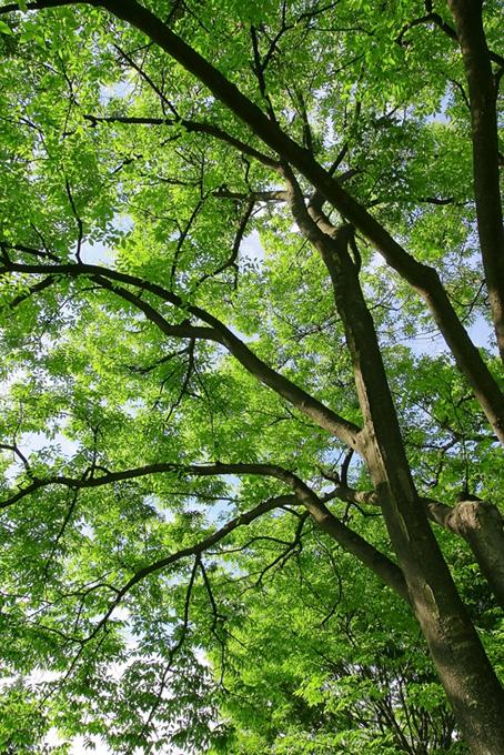 木々と葉の写真