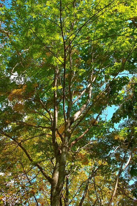 林と樹木の写真