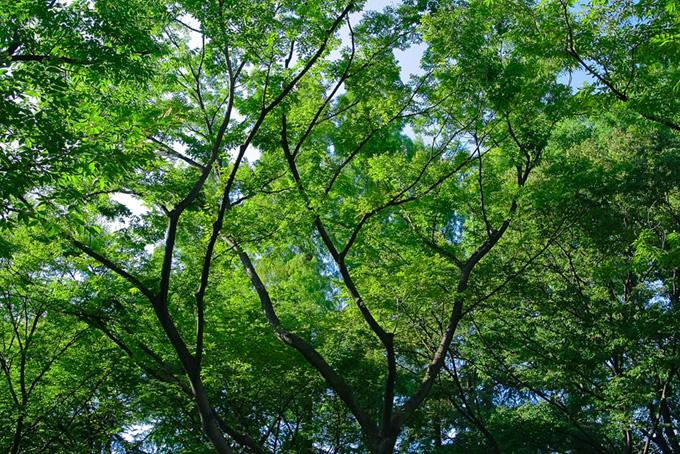 「木 素材」新緑が美しい木の写真、空と大きな樹木の背景、季節の色々な種類の木の画像など、高画質&高解像度の画像・写真素材を無料でダウンロード