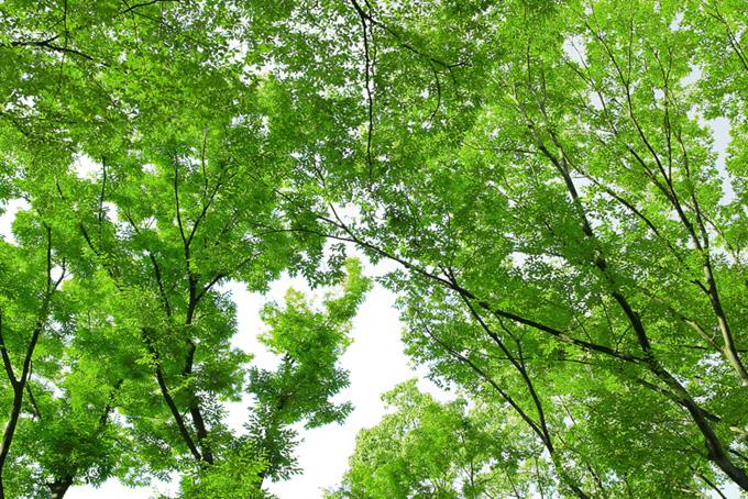 季節の木々の背景