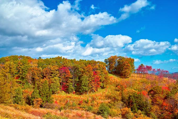 季節の木々(紅葉 風景のフリー画像)