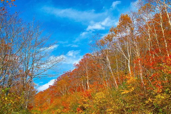 山の木々(紅葉 景色のフリー画像)