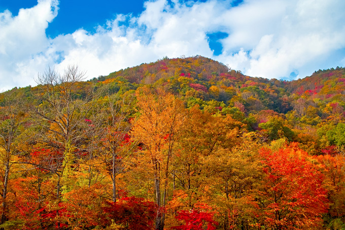 山の木々(紅葉 風景のフリー画像)