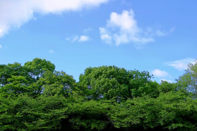緑と紅葉の木々のテクスチャ