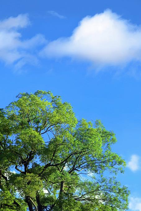 山と森の樹木