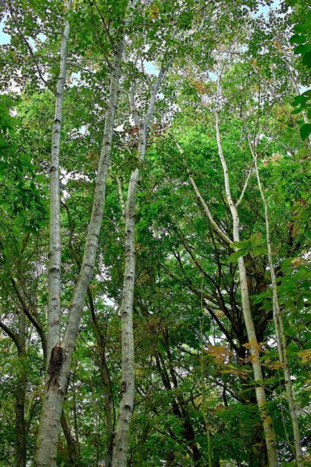 山と森の樹木のテクスチャ